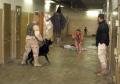 Abu-Ghraib-426x300