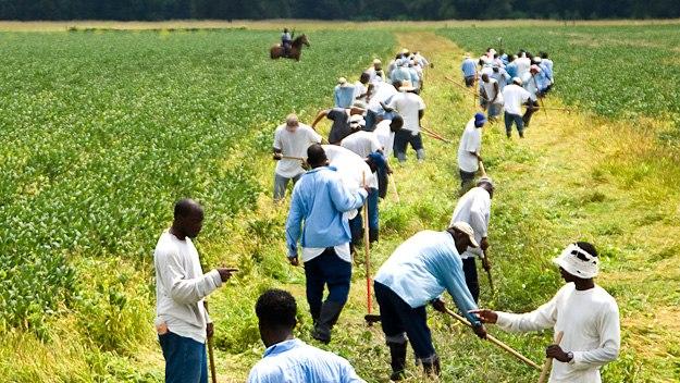 farm prison labour
